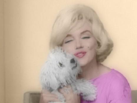 Marilyn Monroe y su perrito bichon Maf