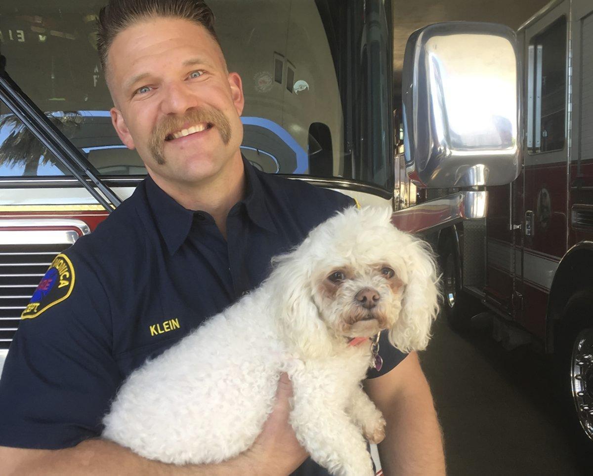bichon salvado bombero