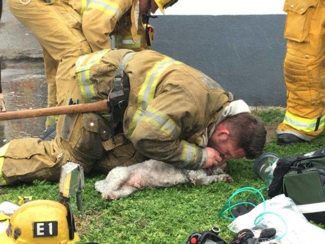 Espectacular. Un bombero salva la vida de un Bichón tras un incendio