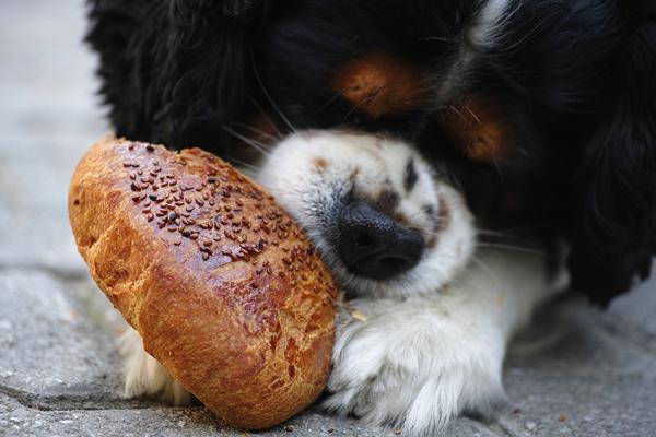perro golosina