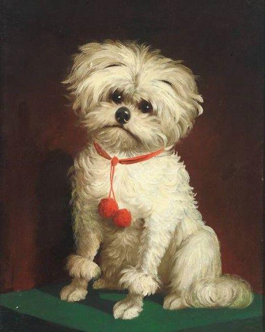 Anónimo del siglo XIX. Bichon Maltes. Pintura inglesa.