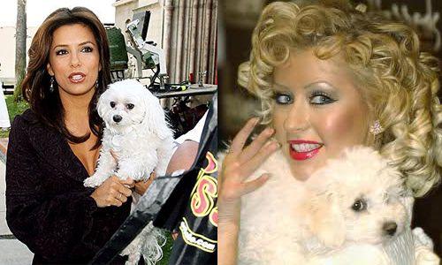 Los bichones malteses de Eva Longoria y Cristina Aguilera