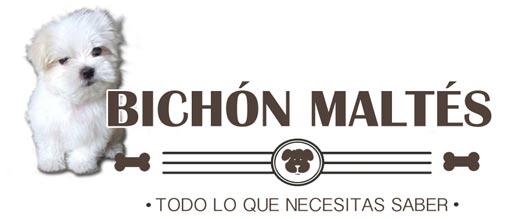 bichonmaltesraza.com