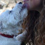 Cómo entender los gestos de nuestros perros