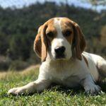 historia del beagle