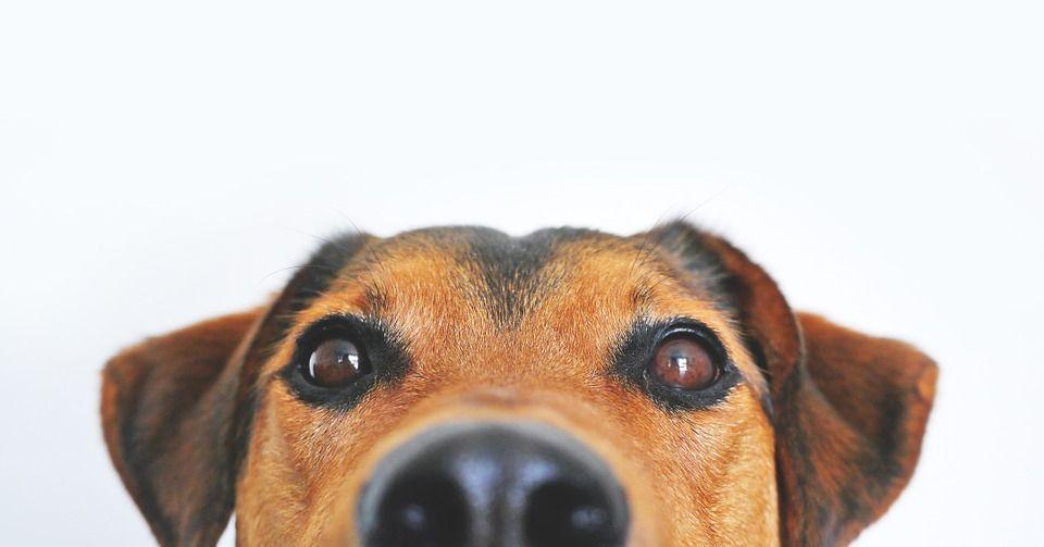 perros adopcion en Madrid