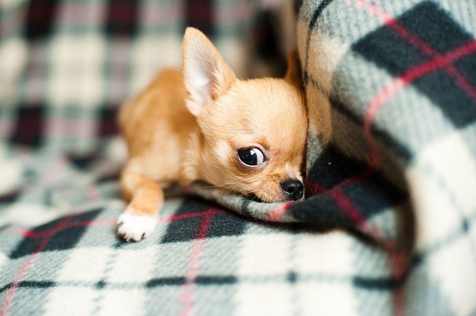 ¿Cómo de inteligentes son los perros?