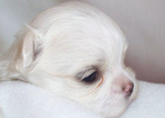 guia de embarazo para perras