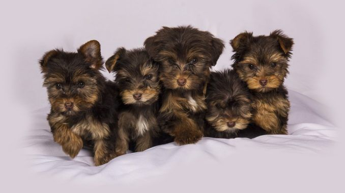 perros en venta. porqué no comprar mascotas on line