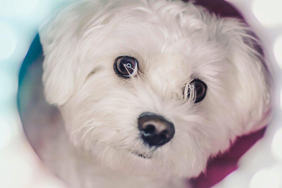 Adoptar un perro gratis. Todo lo que debes saber