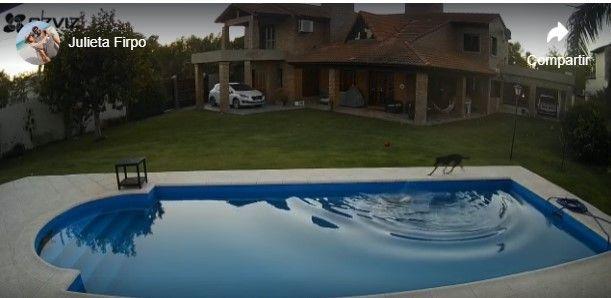 Así ayuda una perrita a salir de la piscina a su compañera ciega