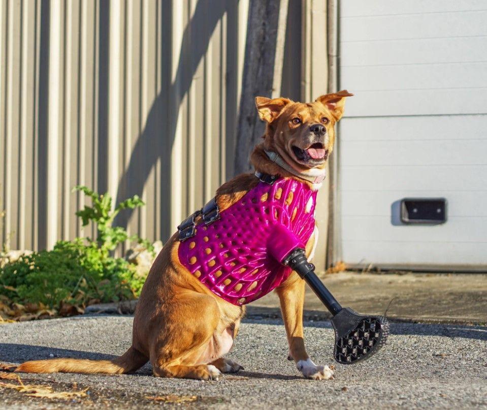 ¿Prótesis para mascotas en impresión 3D?