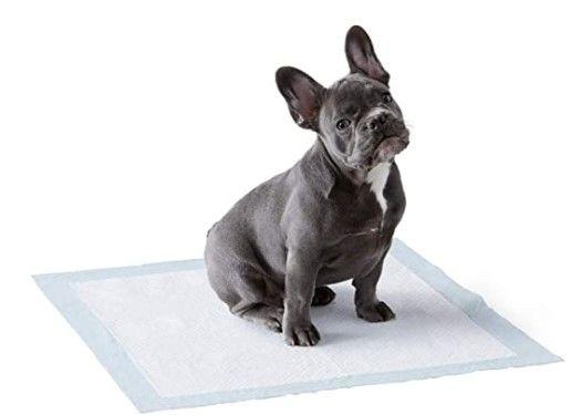 ¿Qué son las toallitas de entrenamiento para perros?