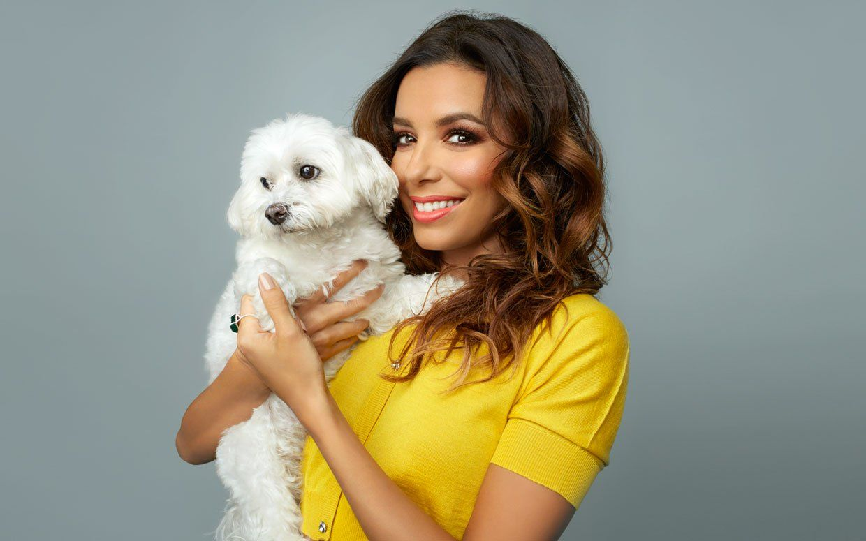 Jinxy, el perro maltés de Eva Longoria