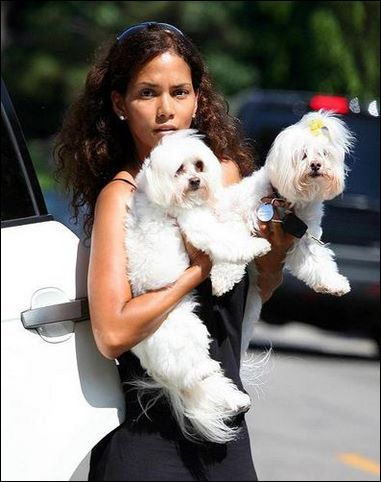Halle Berry con sus malteses Willow and Polly